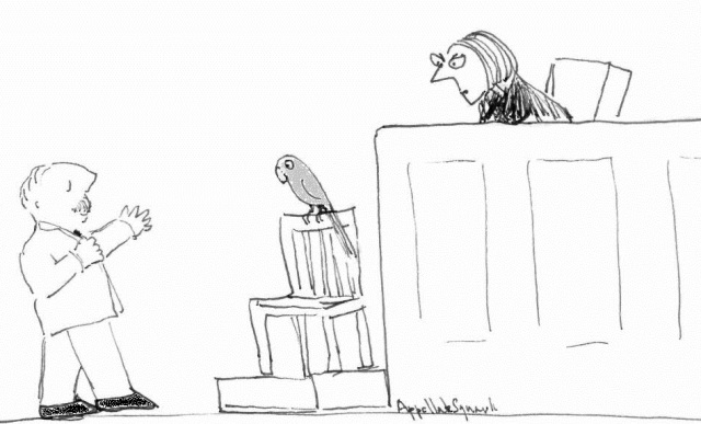 Grey parrot testifying