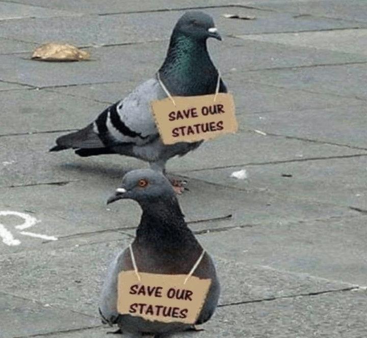pigeons.jpg (720×664)